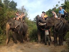 elephants and family