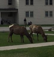 14 book elk 17-may